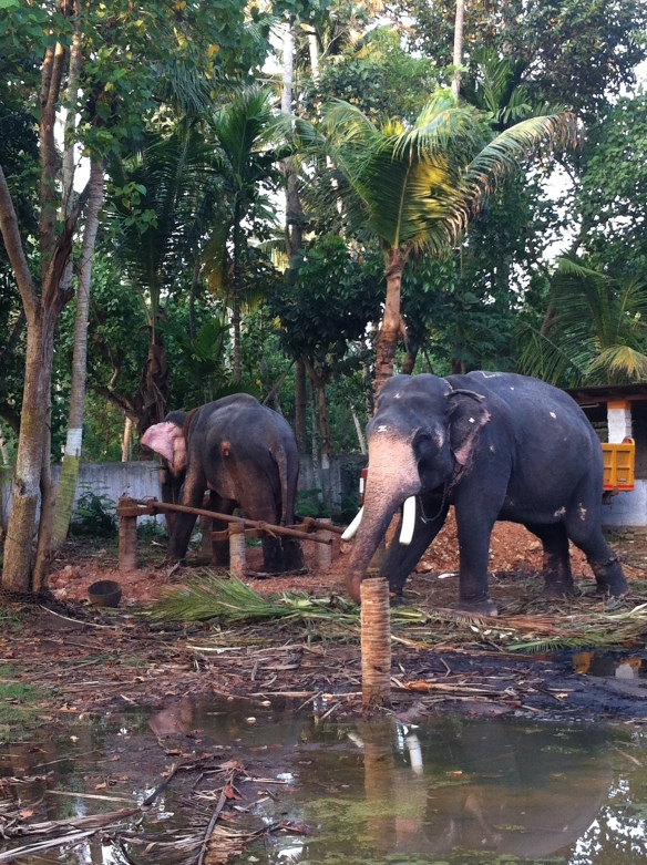 Two is company, even with elephants
